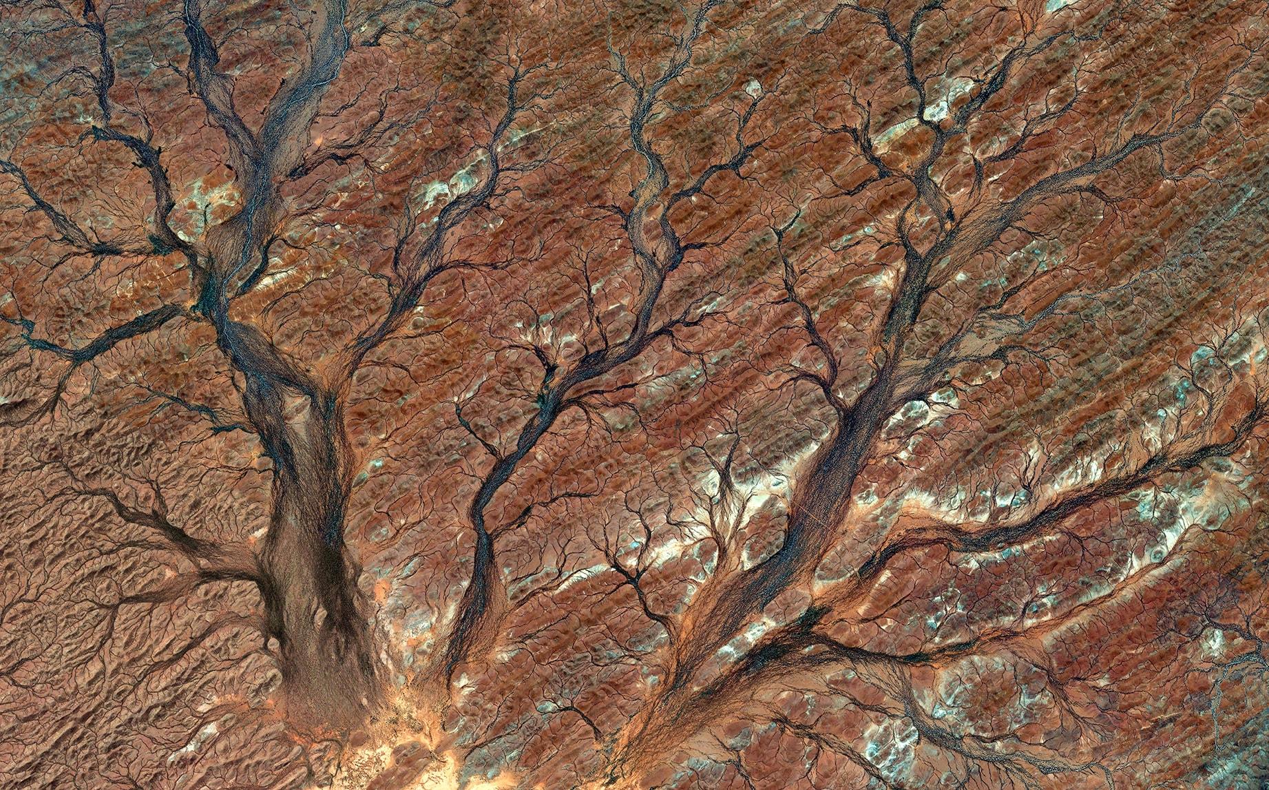 The Satellite Garden 13 Australia, 2018, cm 87×140, 1/9