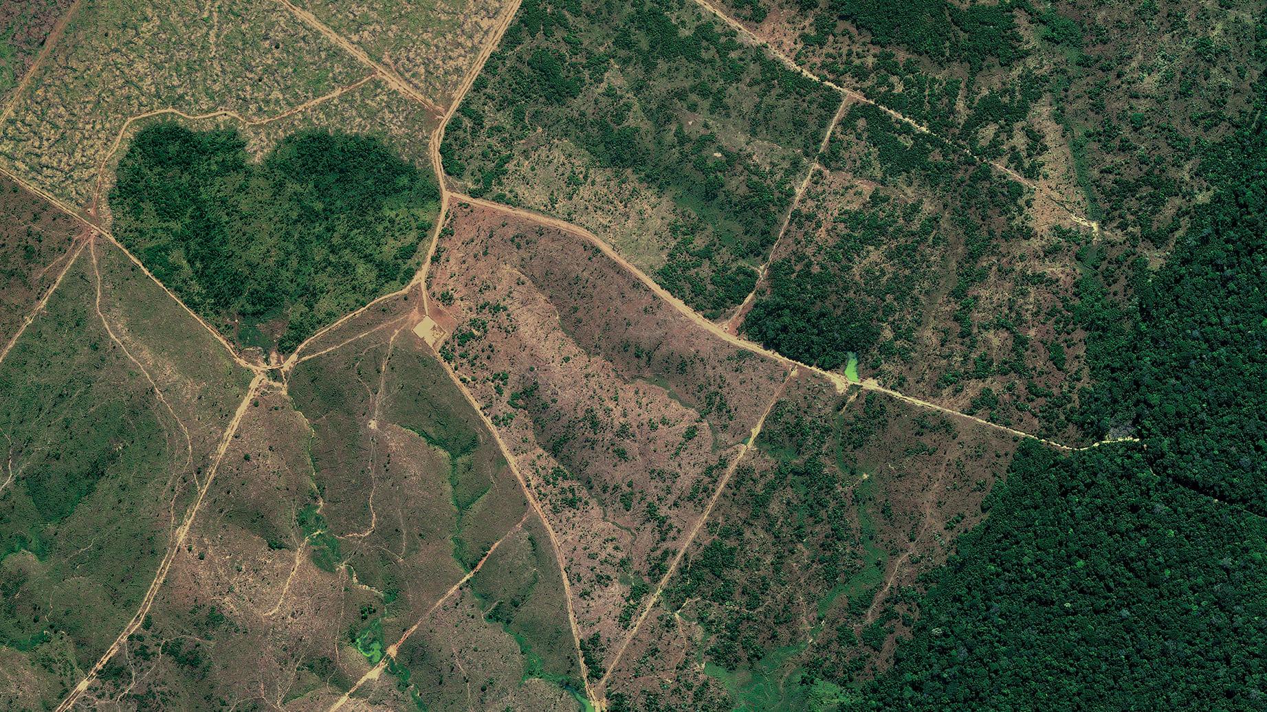 WLP 10 Brazil, 2015, cm 67×120, 1/9
